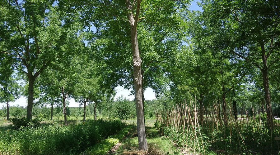 Agroforesterie et maraîchage - ARBRATATOUILLE - Recherche